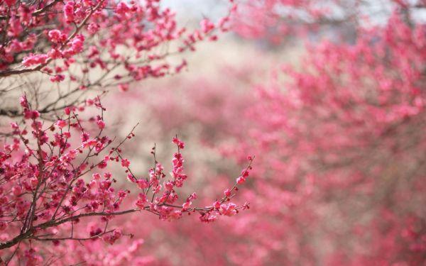 تصویر: http://up.najiforum.ir/uploads/file1/1367301663.jpg